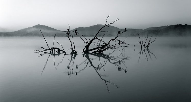 nature-reserve-375609_960_720