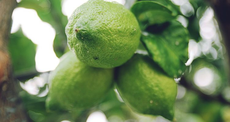 lemon-1246682_960_720