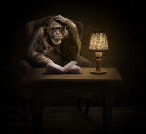 monkey-1757972_960_720[1]