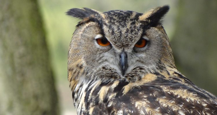 owl-44236_960_720[1]