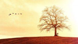 tree-3097417_1920[1]